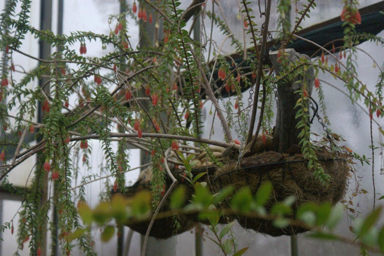 Узенькая тропинка по которой савушкин 15 фотография