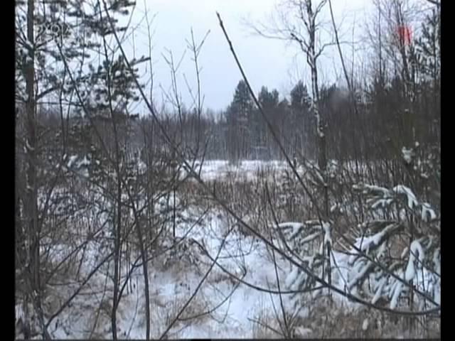 Охота с гончими зимой на зайца и лису Часть 2 /Rimec