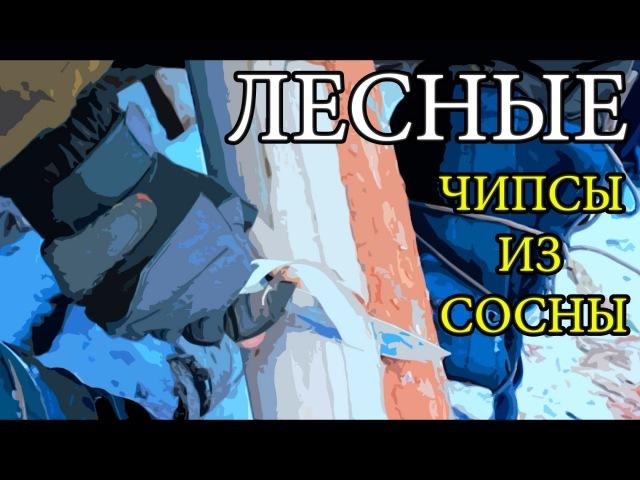Дикая кухня. Чипсы из сосны / Лесные / 10.12.2015