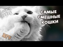Самые смешные кошки 14 ∙ Приколы с животными 2015 ∙ Best Funny Cats Compilation · Part 14