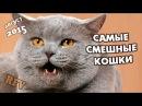 Самые смешные кошки 16 ∙ Приколы с животными 2015 ∙ Best Funny Cats Compilation · Part 16