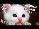 Самые смешные кошки 13 ∙ Приколы с животными 2015 ∙ Best Funny Cats Compilation · Part 13