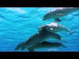 DJ Slon &amp Ангел А - Дельфины (Dolphins) (club mix) version number 2 HD