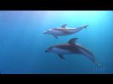 Океан. Красота подводного мира видео бесплатно скачать на телефон или смотреть онлайн Поиск видео_0_1431425067268