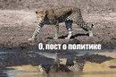 Андрей Левчук фото #39