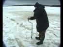Ловля плотвы зимой на безмотылку