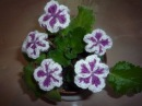 Постоянно цветущий цветок крючком