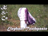 Разложение перекиси водорода Decomposition of hydrogen peroxide (Elephant toothpaste)