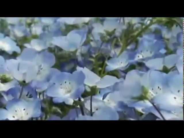 Secret Garden Нежность души
