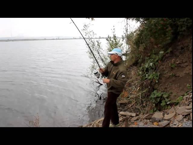 Рыбалка Ловля карпа на зиг риг Медвежка 2015 год.