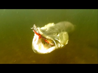 50+ best pike attacks underwater 2015. Fishing wt lures. Рыбалка щука атака под водой.