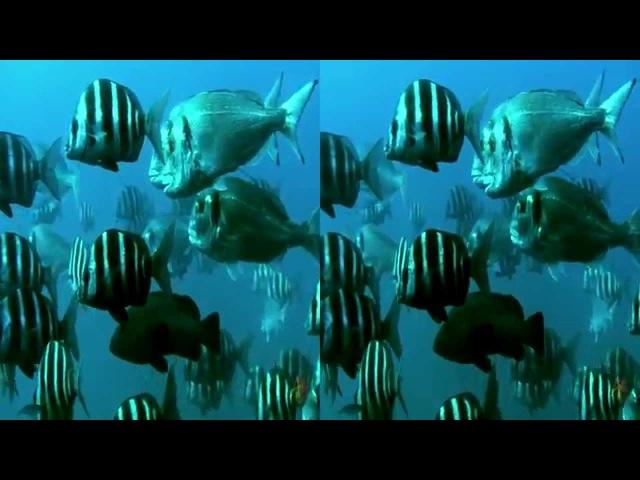 Cabo de Palos-Cabo Tiñosos 3D SBS 2013