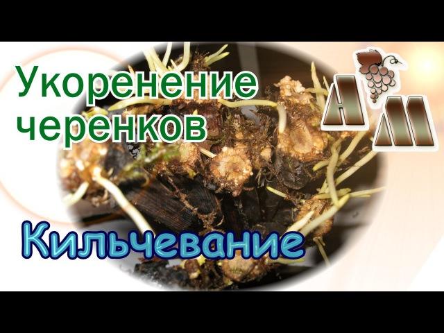 🍇 Укоренение черенков винограда - 2. Кильчевание черенков. Кильчеватель