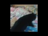 Скотч и кот