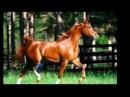 Цыганские песни и романсы Беговые кони