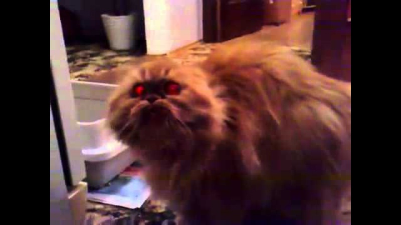 Дьявол в кошке