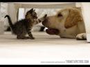 Katzen stehlen die Hunde Betten sehr lustige Videos youtube Compilation 2014