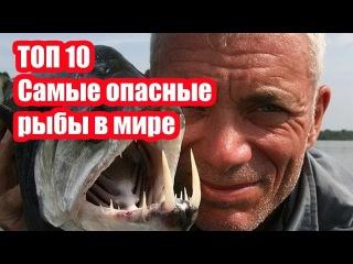 ТОП 10 Самые опасные рыбы в мире | ИНТЕРЕСНЫЕ ФАКТЫ