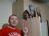 Тусовка Сердцеедов:))) Ушастая сова, Ястреб и Сокол Пустельга:) Meeting predators