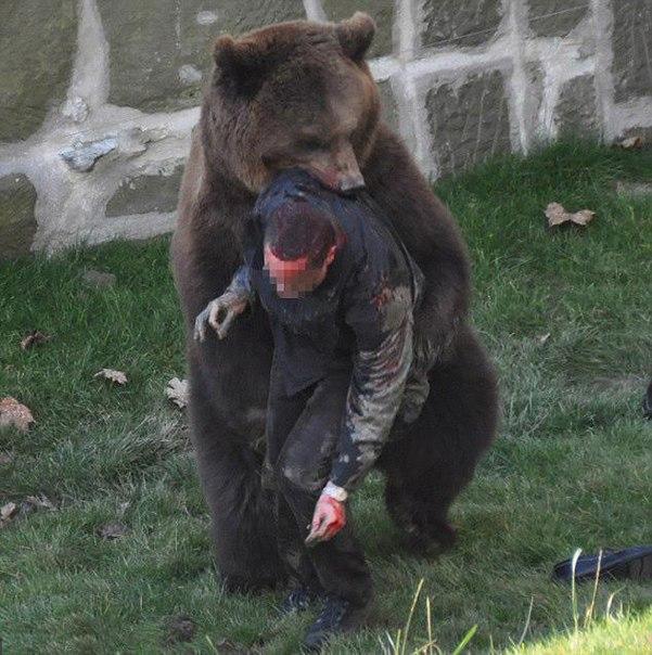 Фото голого лысого медведя 21 фотография