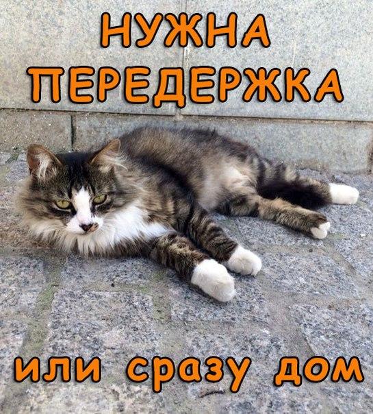 Москва или Калуга .