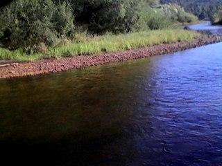 активатор клёва fishhungry отзывы форум