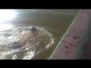 підготовка до Open water Swimming