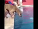 Кто сказал, что собаки не самые умные животные?