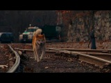 Крек и Ассаи - собака (rework HD)