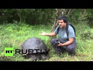 Эквадор: Новые виды гигантской черепахи обнаружил на Галапагосских островах.
