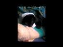 Мой кот мадыльер под музыку Dress Code Я персона вип вип у меня есть джип джип обганяю подрезаю все сигналят бип бип