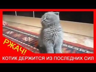 ★ Милый котик засыпает на ходу! Няшный котёнок прикольно уснул. Ржач и угар!