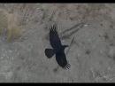 Дрон zmr250 против птиц Drone atack birds
