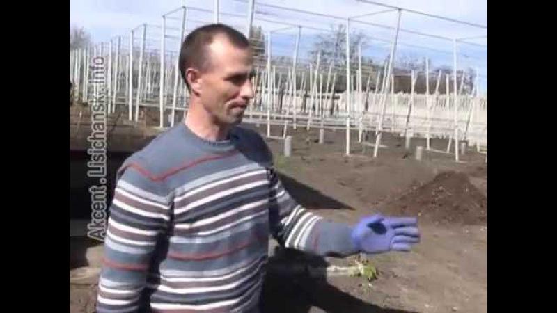 Сам себе агроном - Посадка винограда