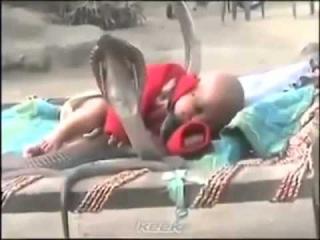 Кобры охраняют сон ребенка