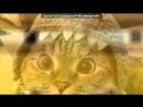 «С моей стены» под музыку Свинья - Хрюканье и визг.