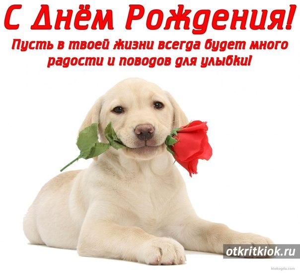 Поздравления с днем рождения от собачек