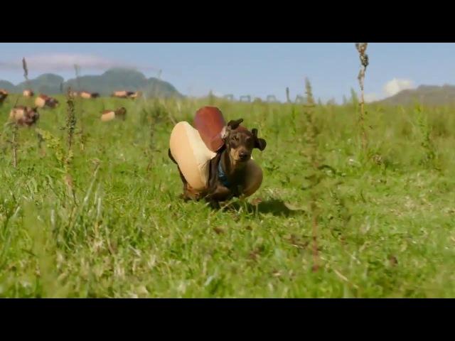 Hot dogs (такса-сосиска)