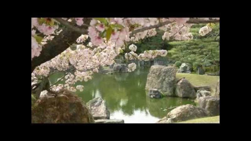 Мхи в садах мира