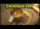 Сосновай чай. Pine tea.