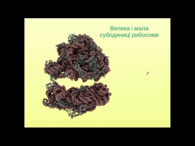 Задачі ЗНО з молекулярної біології (частина 3)
