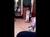Обстрел кота жидким конфетти