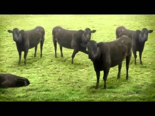 психоделика коровьи метаморфозы