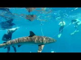 Shark addicts and Free diving Claudia