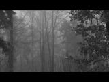 Vinterriket - Forstestruebe