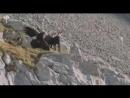 Kartal Ve Dağ Keçisi Sonuç