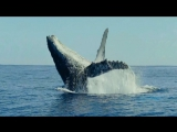 Wonderful Chill Out Music- OXYGENE - The Ocean [1080p HD AV 10 min Remix].mp4.mp4