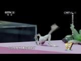 Гипноз на животных: маленькая китайская девочка гипнотизирует и усыпляет животных на сцене китайского шоу талантов