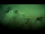 Xenophyophores in the Extreme Deep Sea