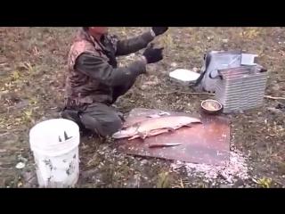 рыбылка в Якутии! бывает и такое)